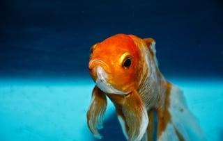 IoT Hack on Fish Tank